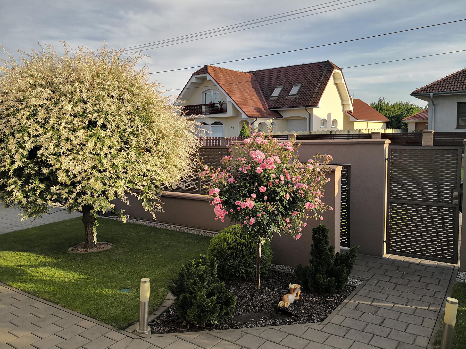 Naša okrasná záhrada už rozrastaná 2020 - Obrázok č. 5