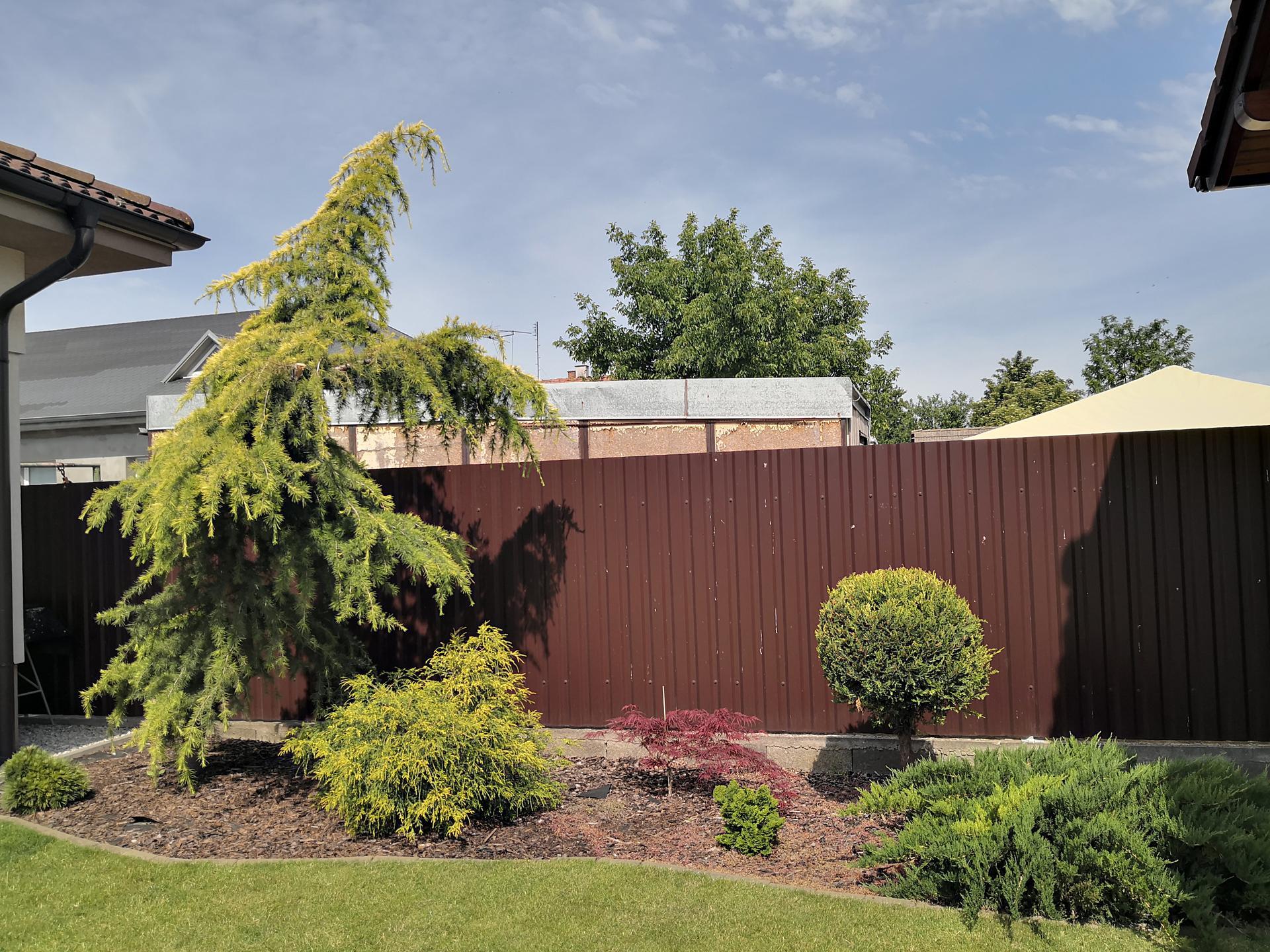 Naša okrasná záhrada už rozrastaná 2020 - Obrázok č. 21