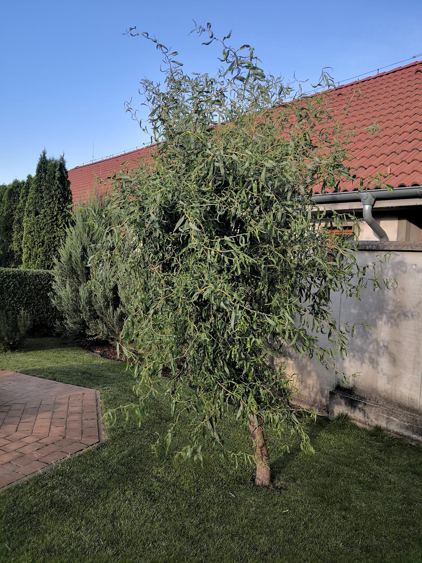 Naša okrasná záhrada už rozrastaná 2020 - Obrázok č. 24