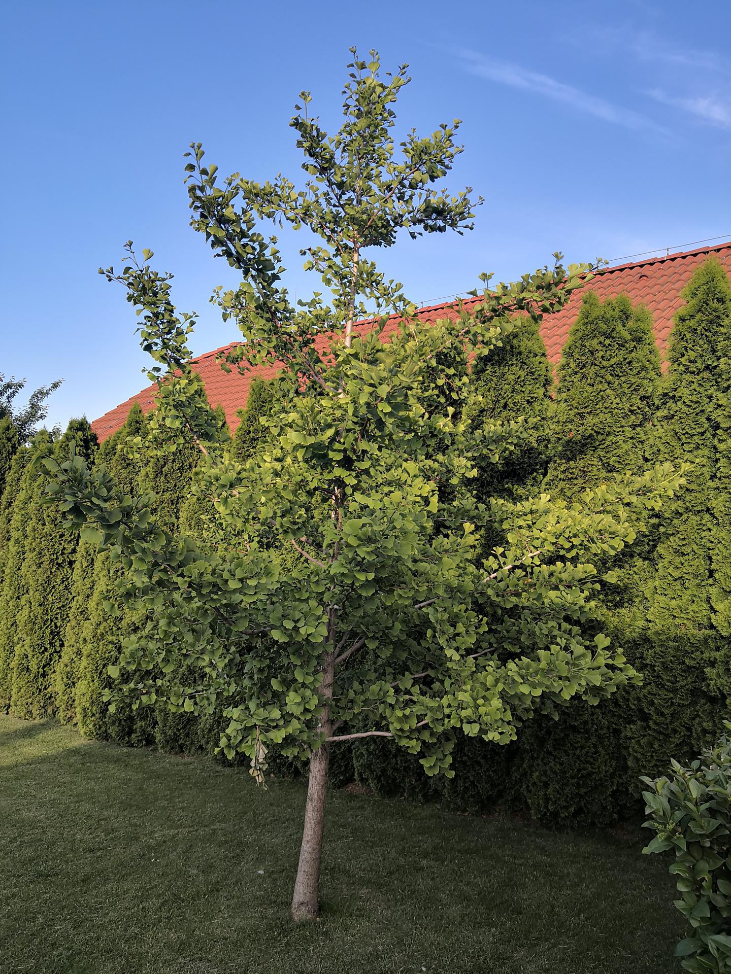 Naša okrasná záhrada už rozrastaná 2020 - Obrázok č. 25