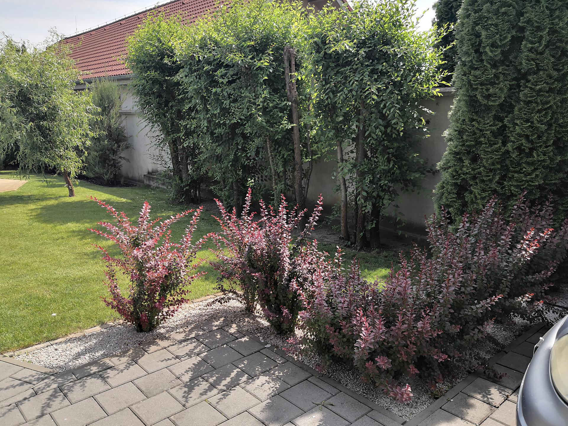 Naša okrasná záhrada už rozrastaná 2020 - Obrázok č. 15