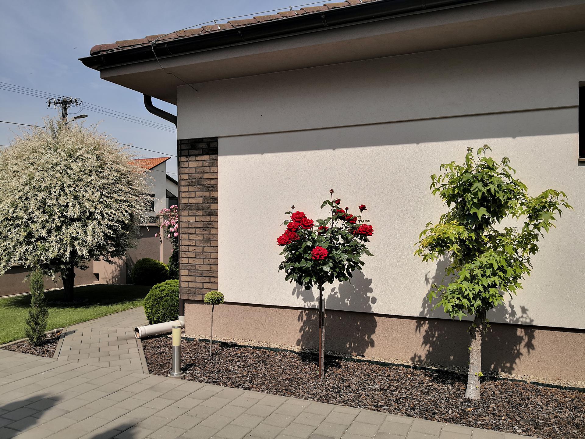 Naša okrasná záhrada už rozrastaná 2020 - Obrázok č. 11