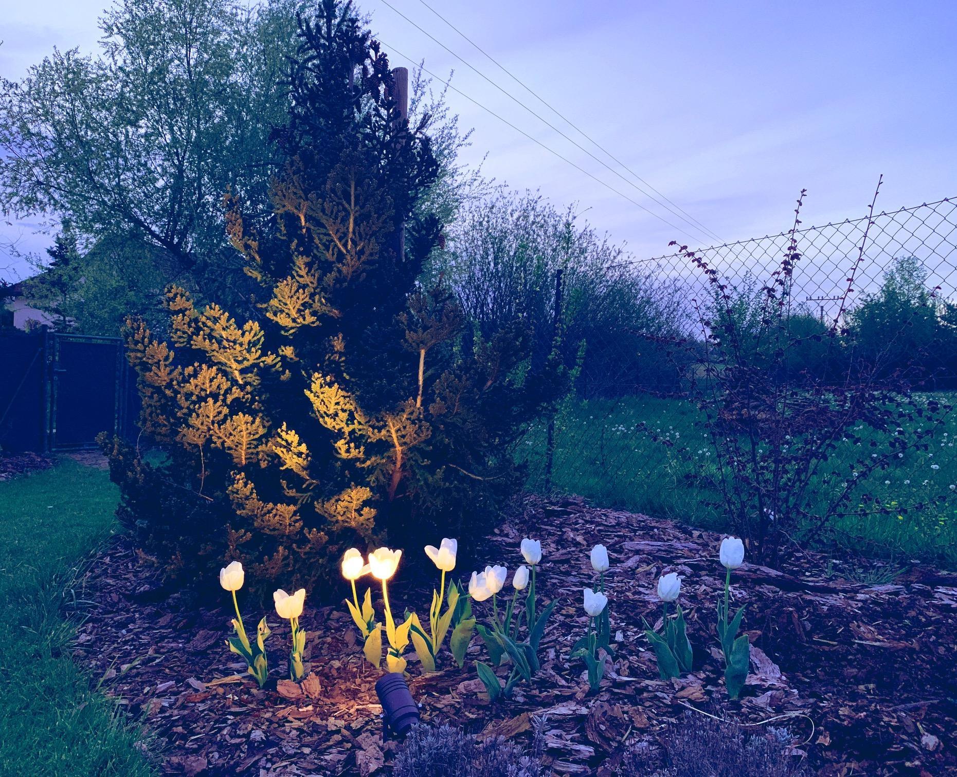 Zahrada 3. rok od výsadby - Obrázek č. 2