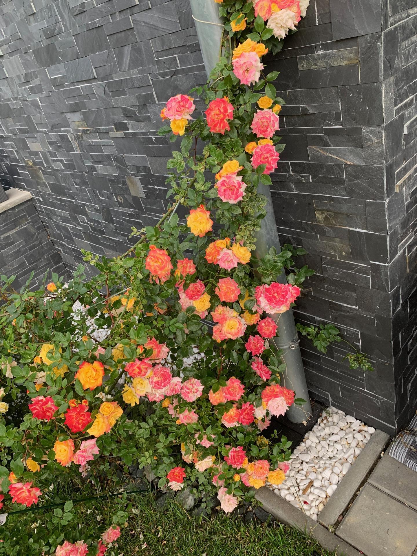 Zahrada 3. rok od výsadby - Obrázek č. 15