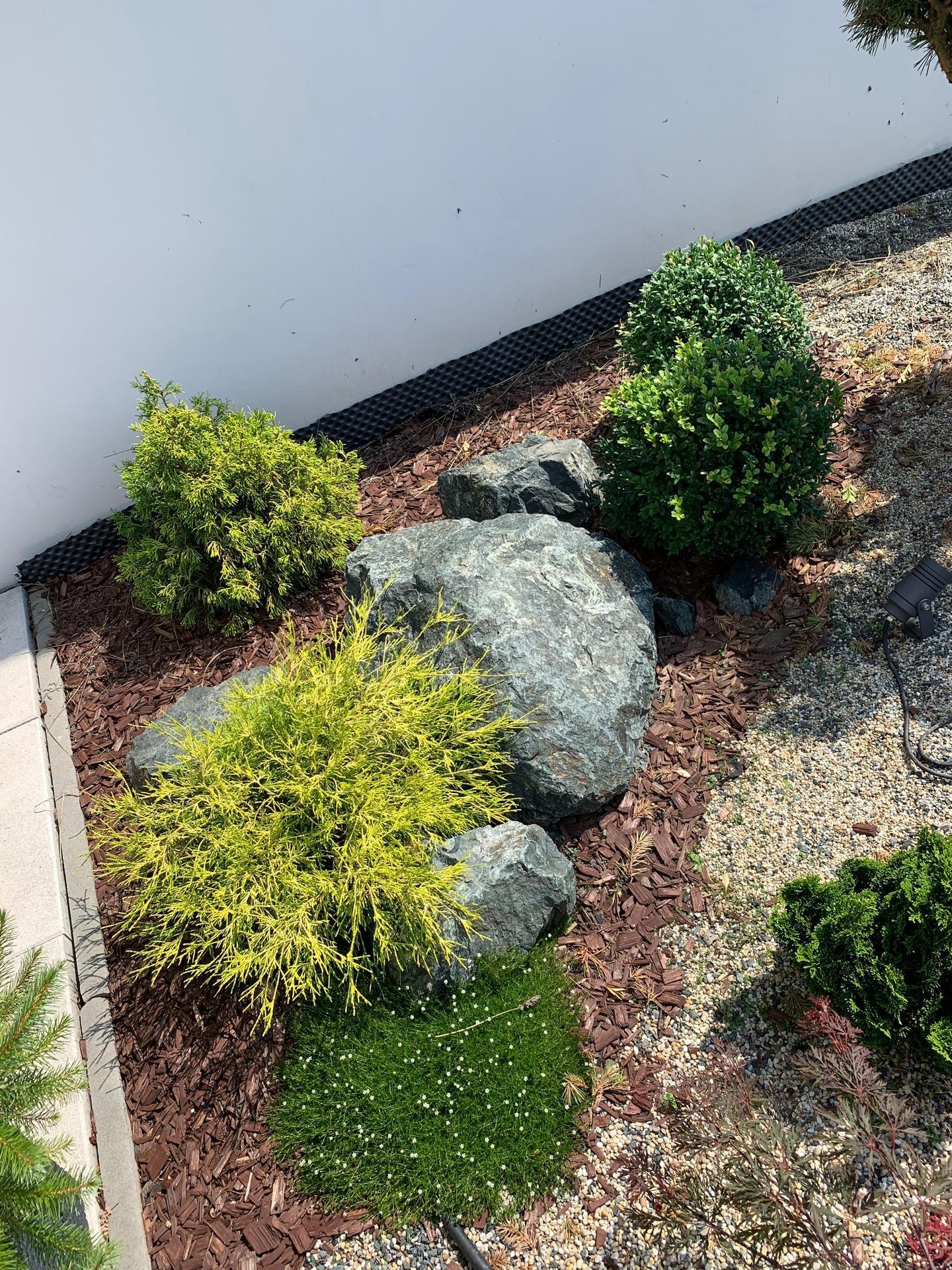 Zahrada 3. rok od výsadby - Obrázek č. 21