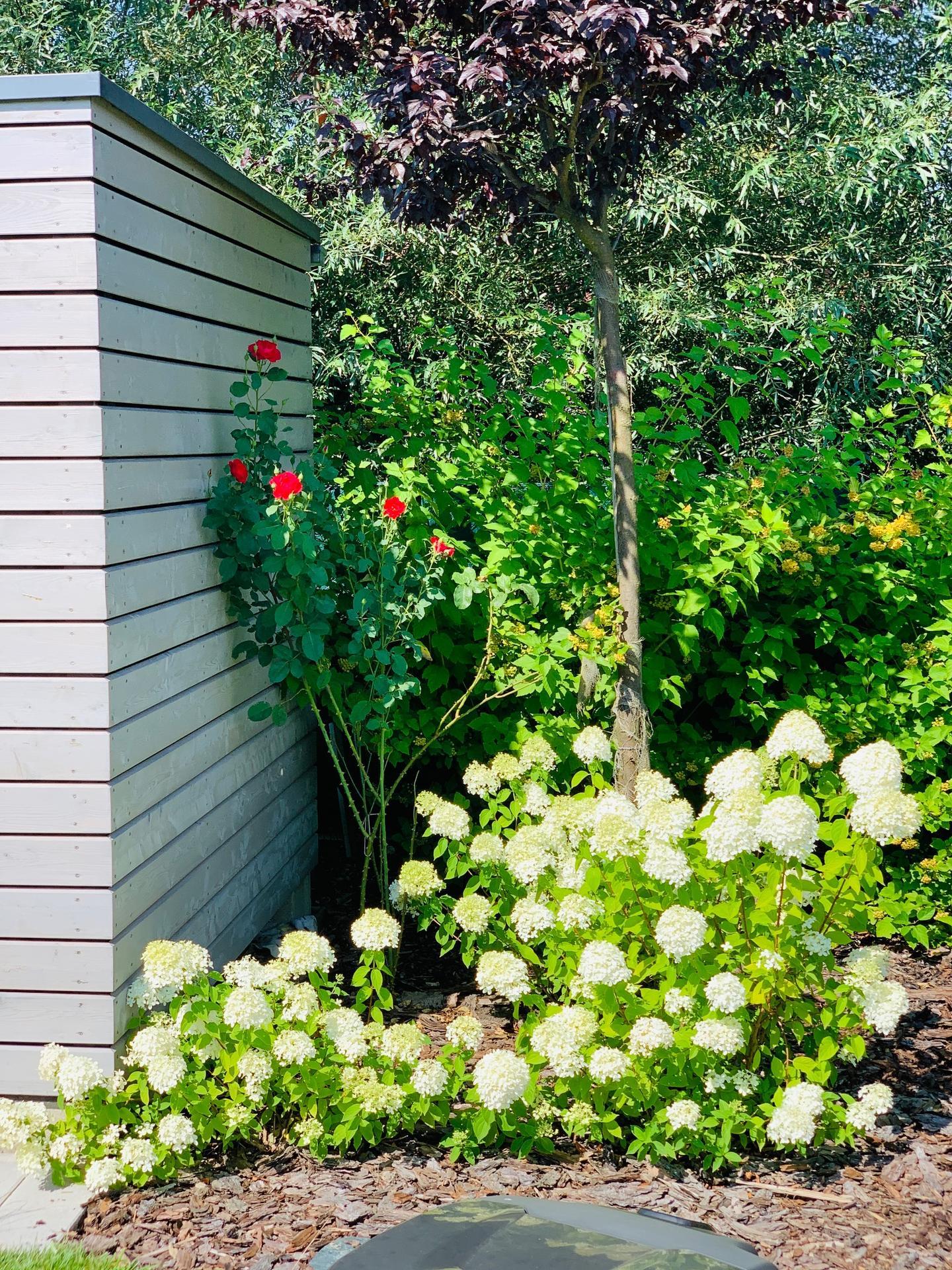 Zahrada 3. rok od výsadby - Obrázek č. 25