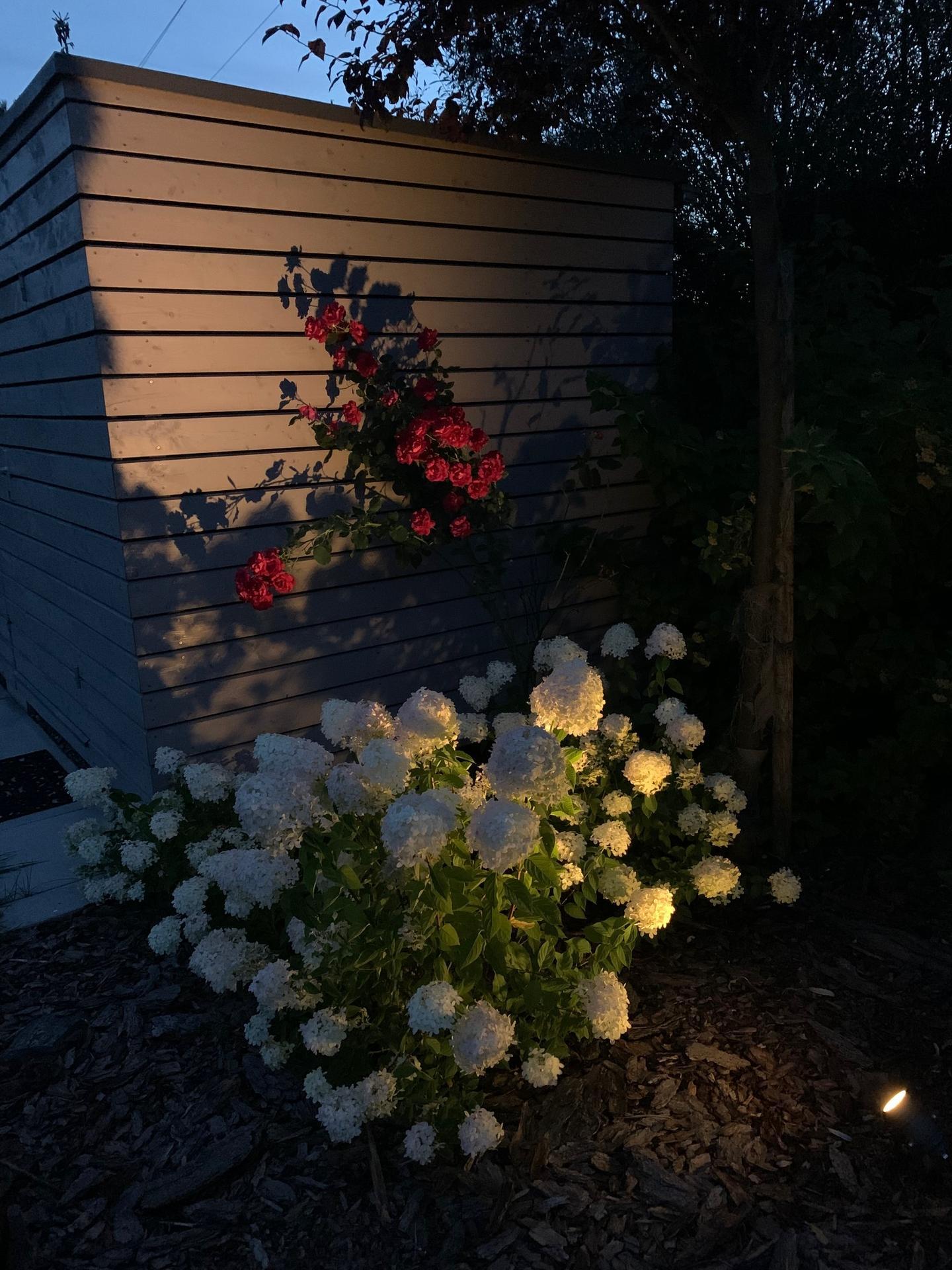 Zahrada 3. rok od výsadby - Obrázek č. 30