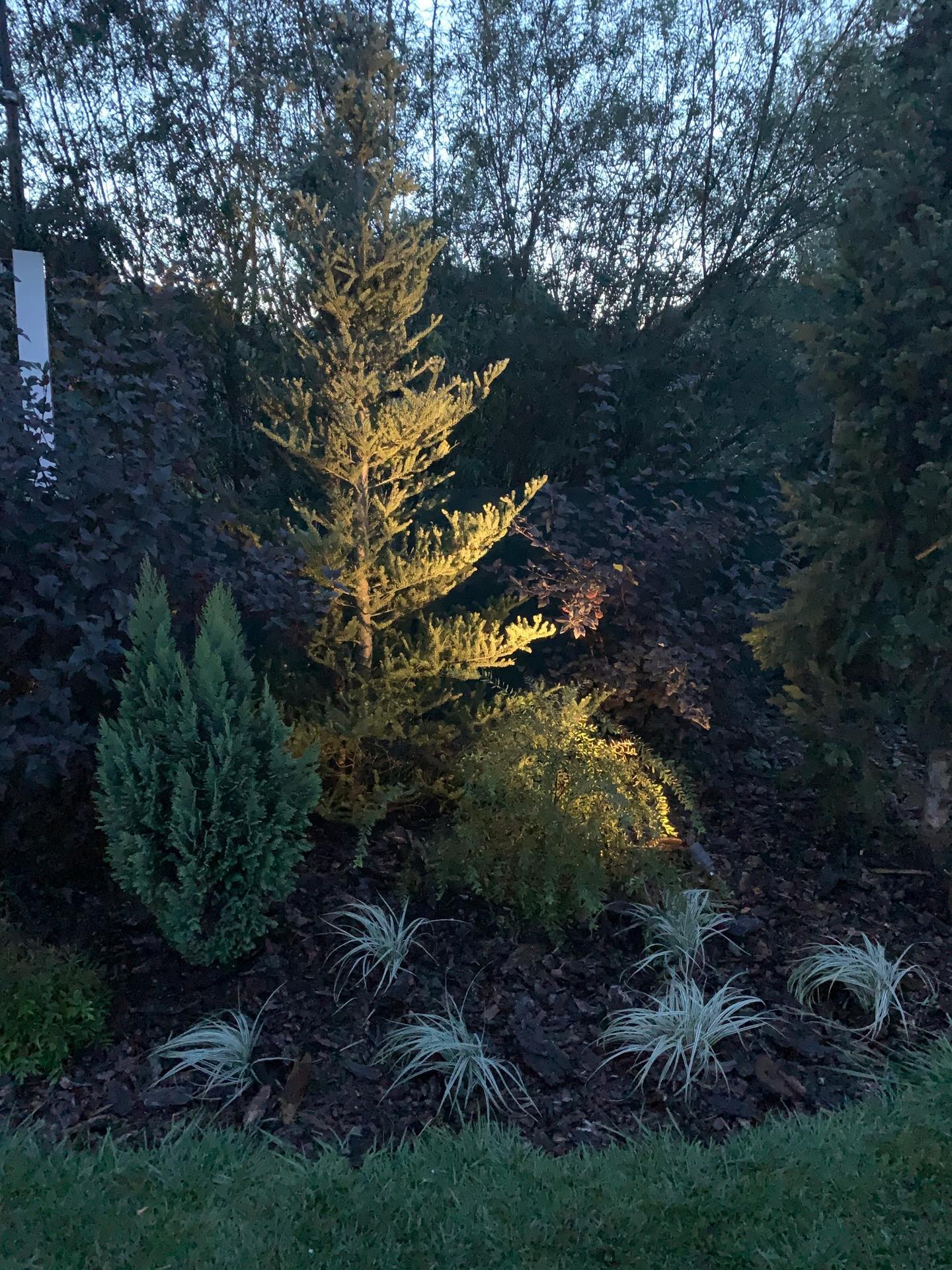 Zahrada 3. rok od výsadby - Obrázek č. 31