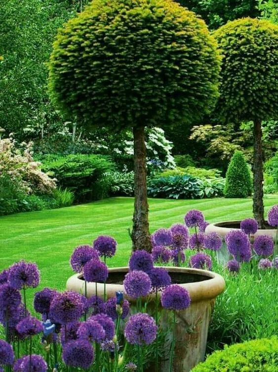 Zahrada geometrická - Obrázek č. 3