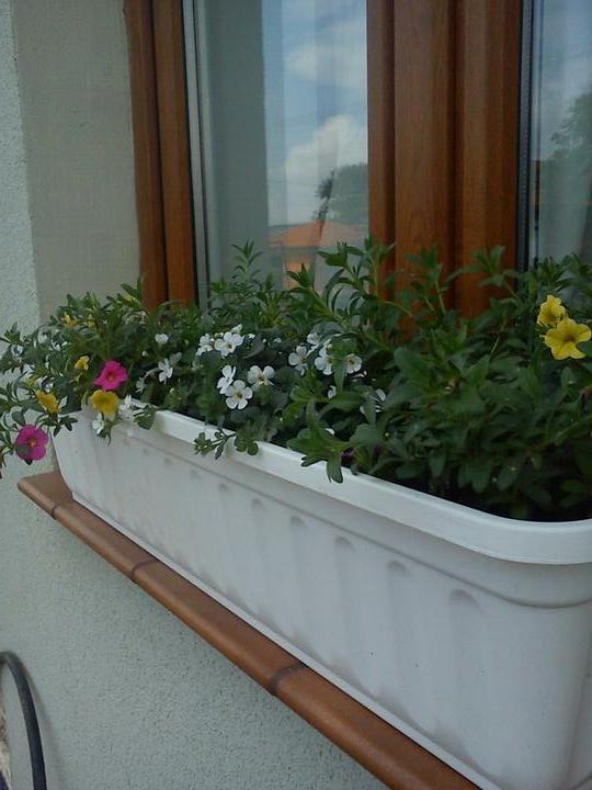 ..domcek - parapetky dokoncene ... kvetinky nasadene..juchuuu