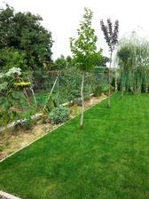 tu budu zase kvitnuce trvalky a za nimi plot zarasteny tahavym vinicom...brezy a ceresna gluboza idu na druhu stranu....