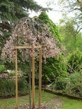 Malus 'Royal Beauty' moje hodně oblíbená. Na jaře krásně kvete a na podzim má maličkatý jablíčka, která se dají použít i na výzdobu. A převislý tvar je bonus navíc.