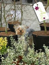 Jaký pán, takový pes ... Amynka se učí už odmala být zahradnicí :-)