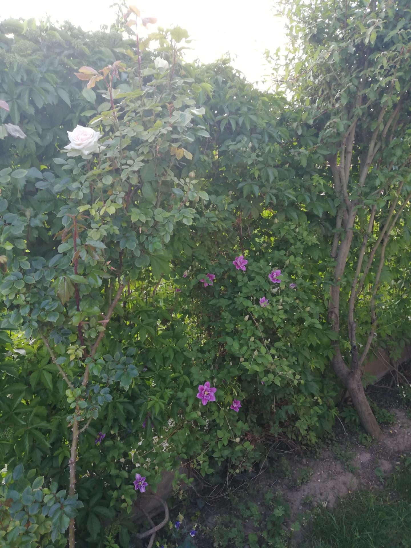 trochu zo záhrady - Obrázok č. 1