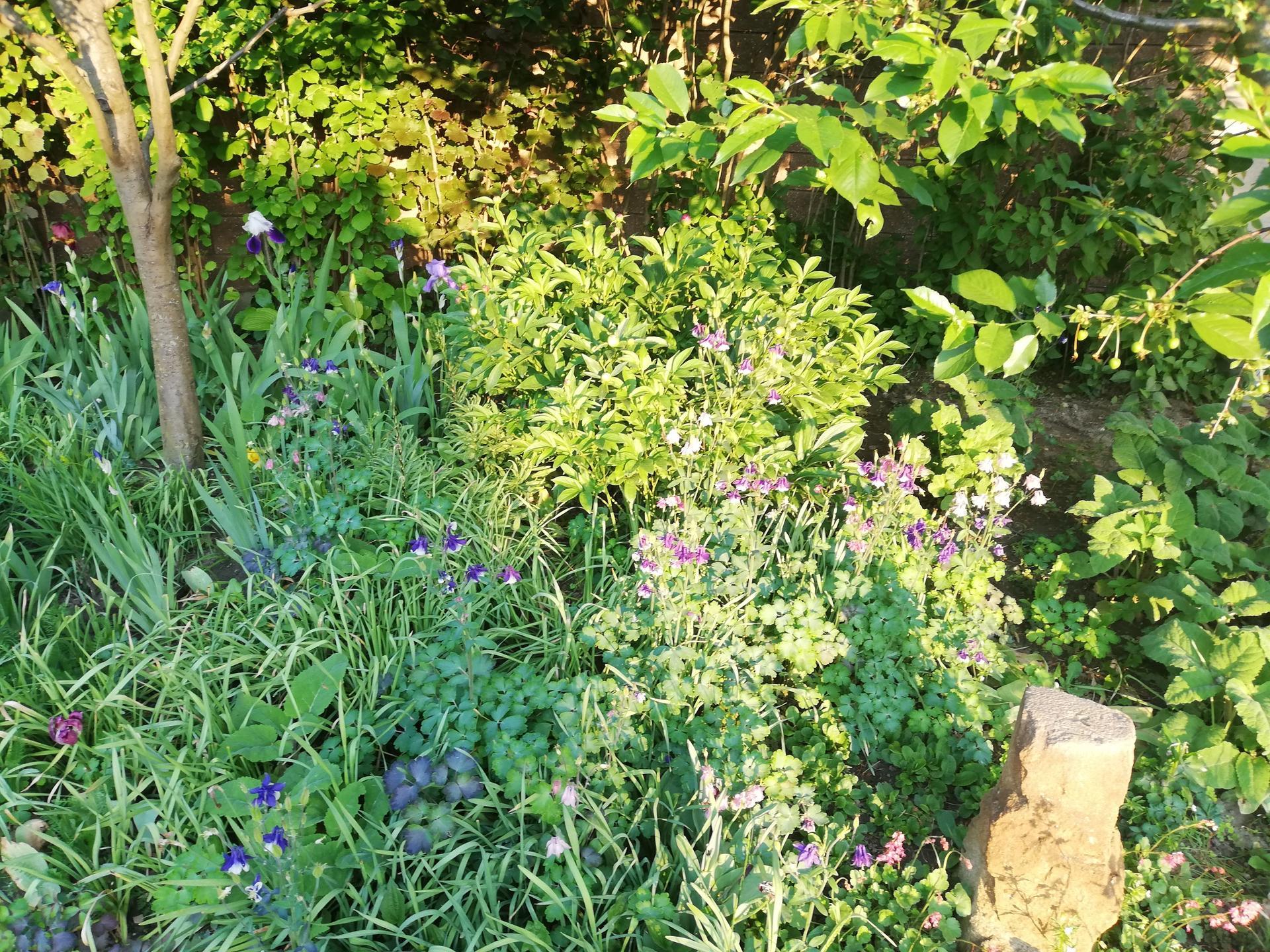 trochu zo záhrady - Obrázok č. 2