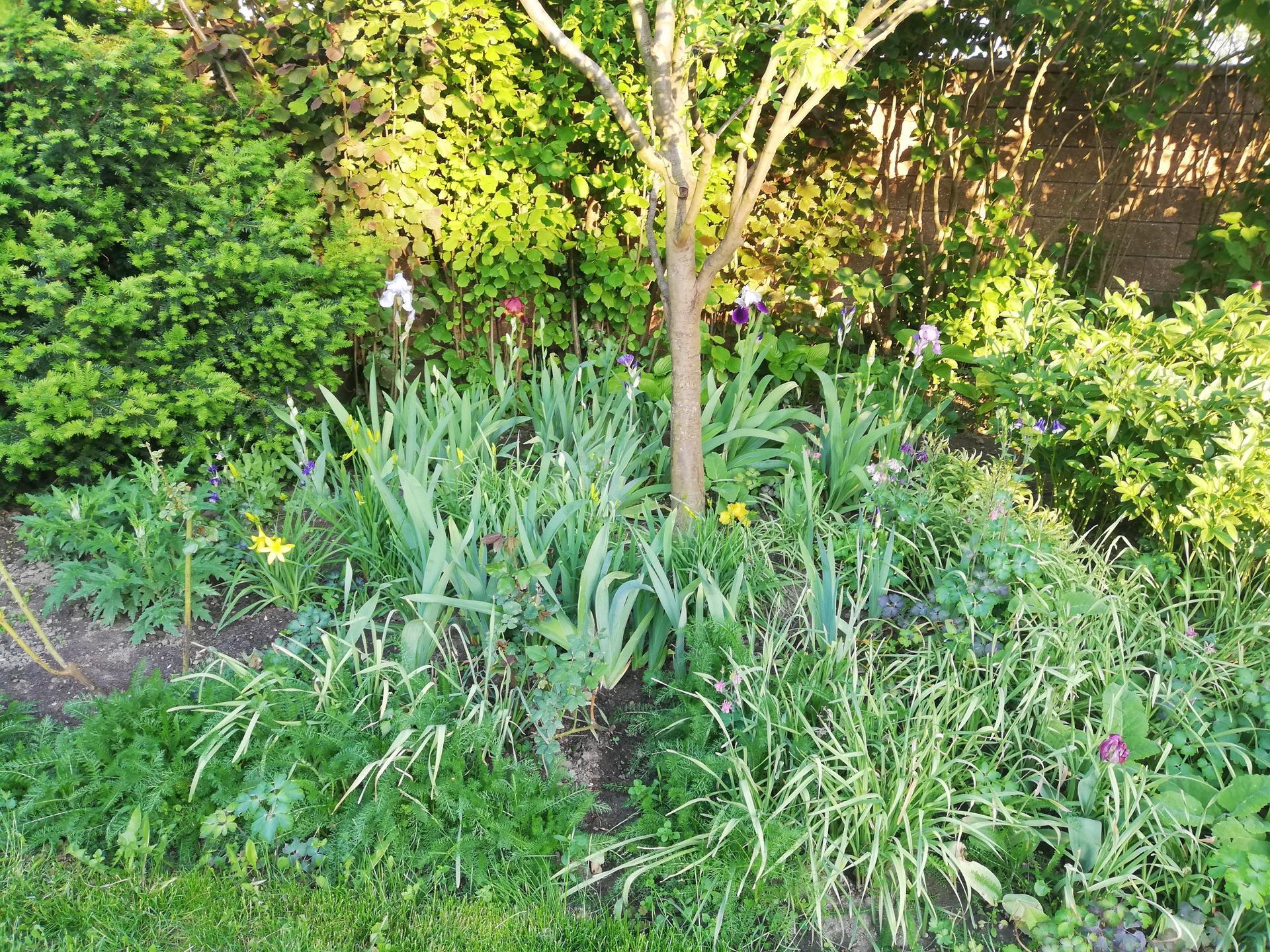 trochu zo záhrady - Obrázok č. 3