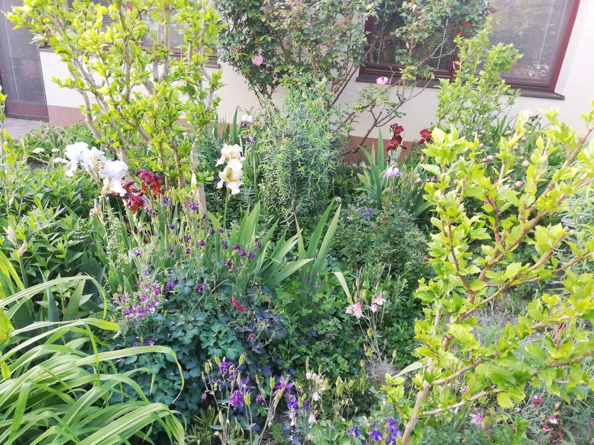 trochu zo záhrady - Obrázok č. 4