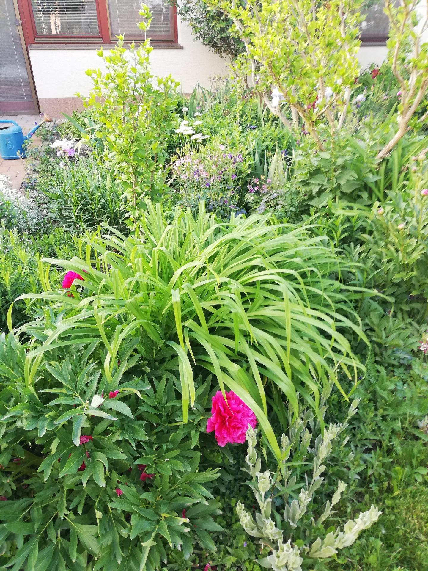 trochu zo záhrady - Obrázok č. 5