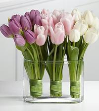 Ružové tulipány by mohli byť fajn :)