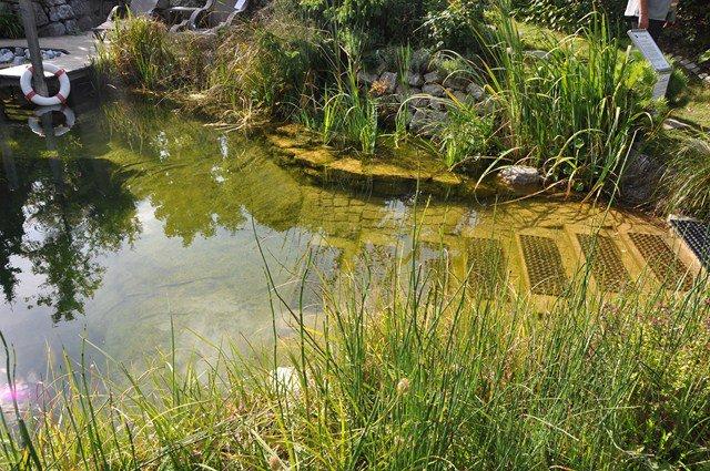 Rastliny miesto chemie - prirodny bazen - Obrázok č. 4