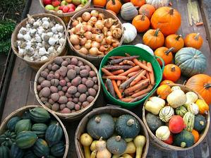 Cesnak mám, cibulu mám, zemiaky mám, mrkvu mám, tekvicu mám ....