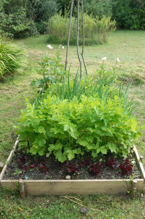 Zahradne inspiracie z netu - Obrázok č. 72