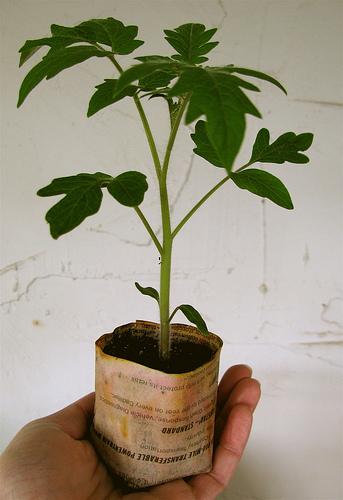 Zahradne inspiracie z netu - Recyklacia papiera na sadenie sadeniciek :)