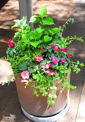 Zahradne inspiracie z netu - Obrázok č. 87