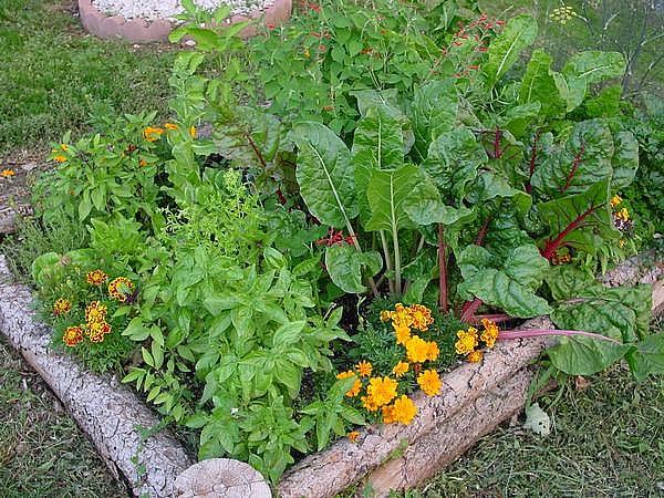 Zahradne inspiracie z netu - Obrázok č. 89