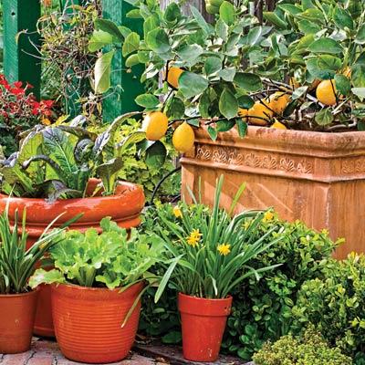 Zahradne inspiracie z netu - Kto najde v okrasnej zahradke salat a mangold :)