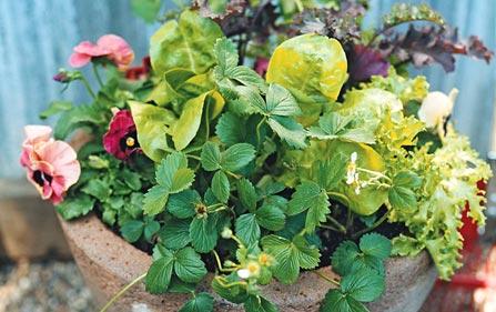 Zahradne inspiracie z netu - Sirotky, jahody, salat