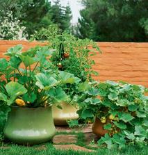 Uzitkova a okrasna zahrada v jednom :) Paradajky a patizon