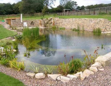 Rastliny miesto chemie - prirodny bazen - Obrázok č. 8