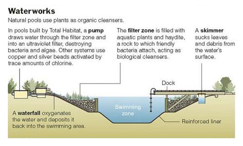 Rastliny miesto chemie - prirodny bazen - Obrázok č. 6