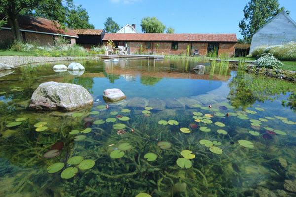 Rastliny miesto chemie - prirodny bazen - Obrázok č. 10