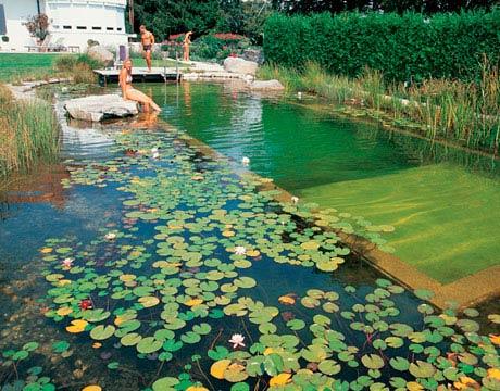 Rastliny miesto chemie - prirodny bazen - Obrázok č. 12