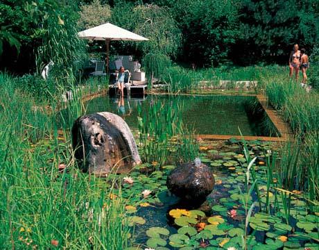 Rastliny miesto chemie - prirodny bazen - Obrázok č. 13