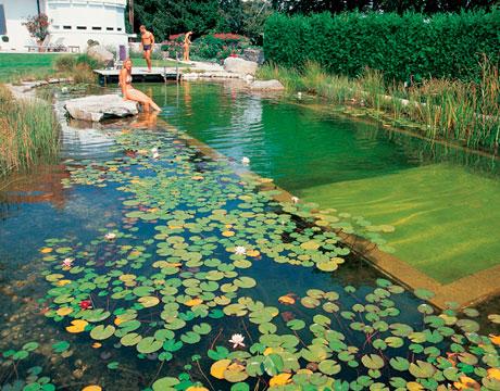 Rastliny miesto chemie - prirodny bazen - Obrázok č. 19