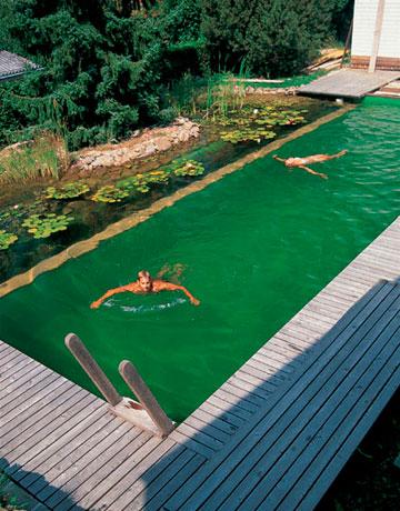 Rastliny miesto chemie - prirodny bazen - Obrázok č. 20
