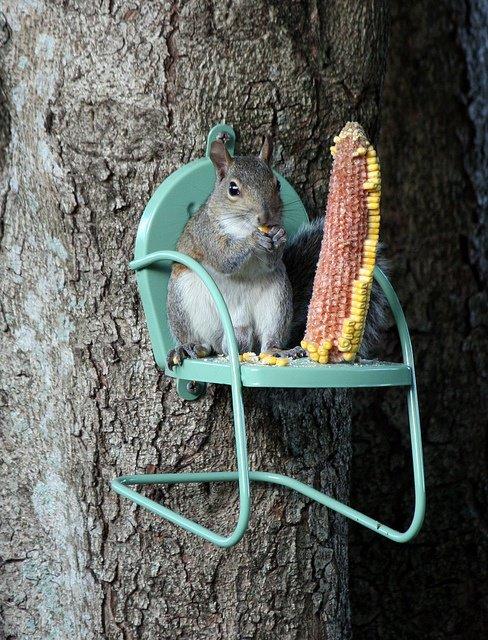 Domček v záhrade - Zeby pre tie nase co mi orechy oberaju? :)))