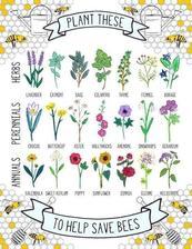 Tieto kvety vyhľadávajú včely