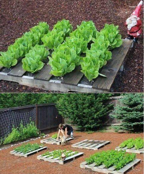Dobré nápady - Paletový záhon. Je úhledný, roste tam málo plevelu. Třeba pro dětičky, aby si pečovaly o svou zahrádku:-)