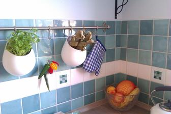 novinky v kuchyni a bylinky...