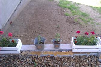 moje první kytky na terase...