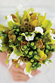 Kvety, kvietky, kvetinky... - Obrázok č. 4