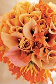 Kvety, kvietky, kvetinky... - Obrázok č. 7