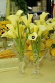 Kvety, kvietky, kvetinky... - Obrázok č. 14