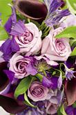 Kvety, kvietky, kvetinky... - Obrázok č. 19