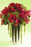 Kvety, kvietky, kvetinky... - Obrázok č. 20