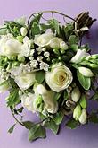 Kvety, kvietky, kvetinky... - Obrázok č. 22